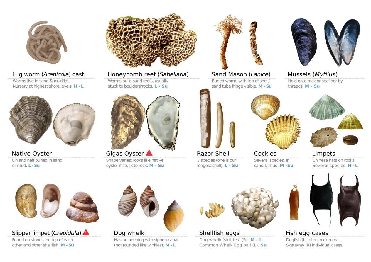 Guía De Biodiversidade